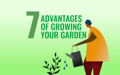 7 ADVANTAGES OF GROWING YOUR GARDEN